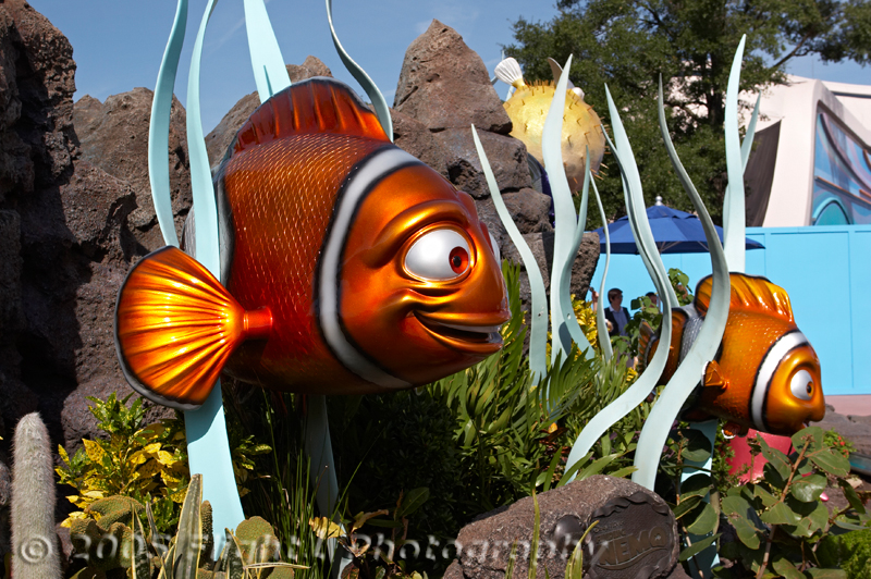 Marlin and Nemo