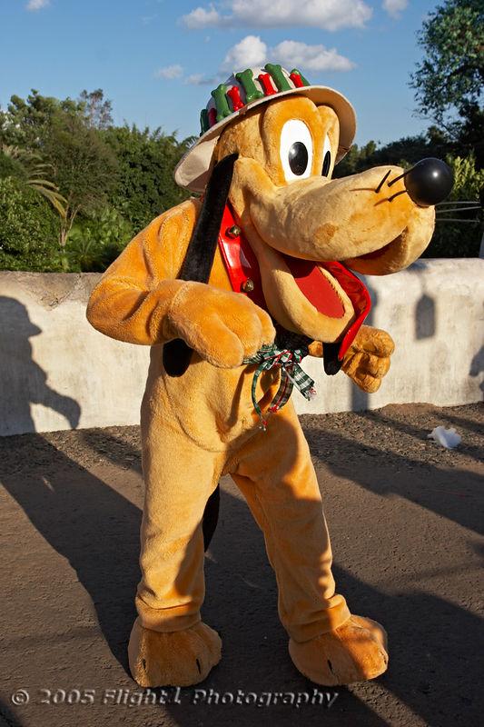 Pluto at Animal Kingdom