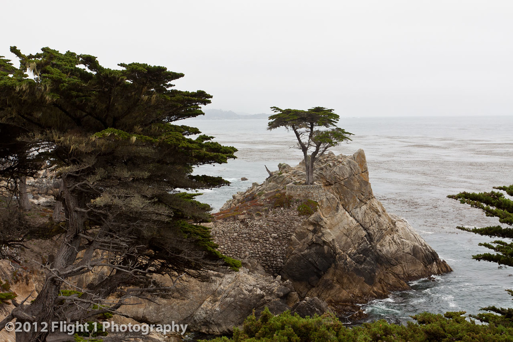 The Lone Cypress at Pebble Beach along the 17 MIle Drive