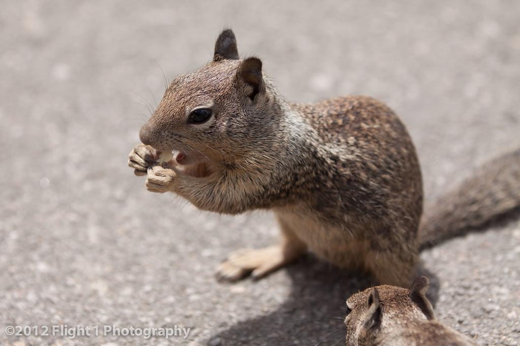 A friendly squirrel near Big Sur