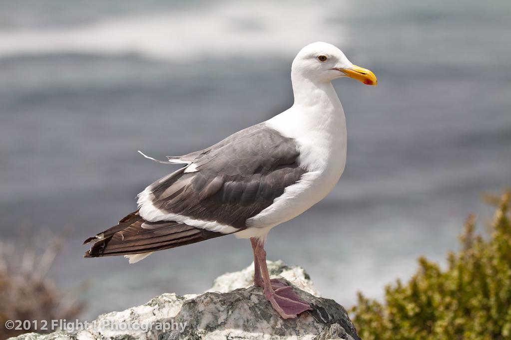A friendly sea gull