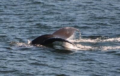 Ketchikan whale