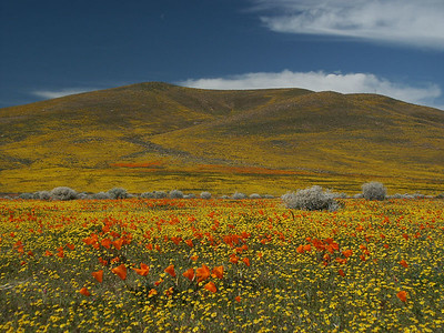 Fields just on the outskirt of the Antelope Valley California Poppy Reserve.