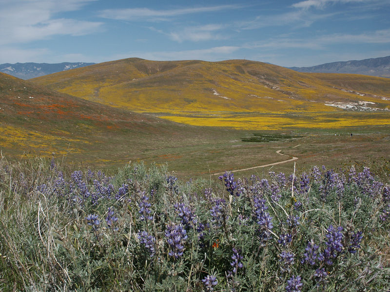 The Antelope Valley California Poppy Reserve is located in the western Antelope Valley at an elevation ranging from 2600-3000 feet.