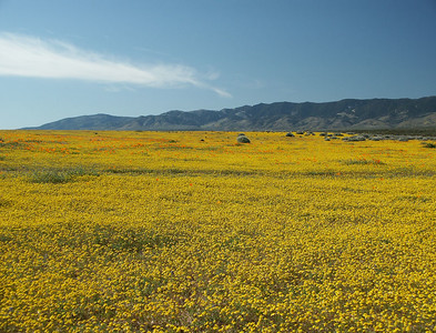 North of HW 138. Mix of goldfields, poppies and rabbit brushes.