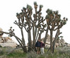 Joshua Tree: Its height varies from 15-40 feet with a diameter of 1-3 feet.