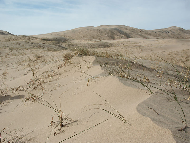 Kelso dunes: 600 ft high and the tallest dunes in CA.