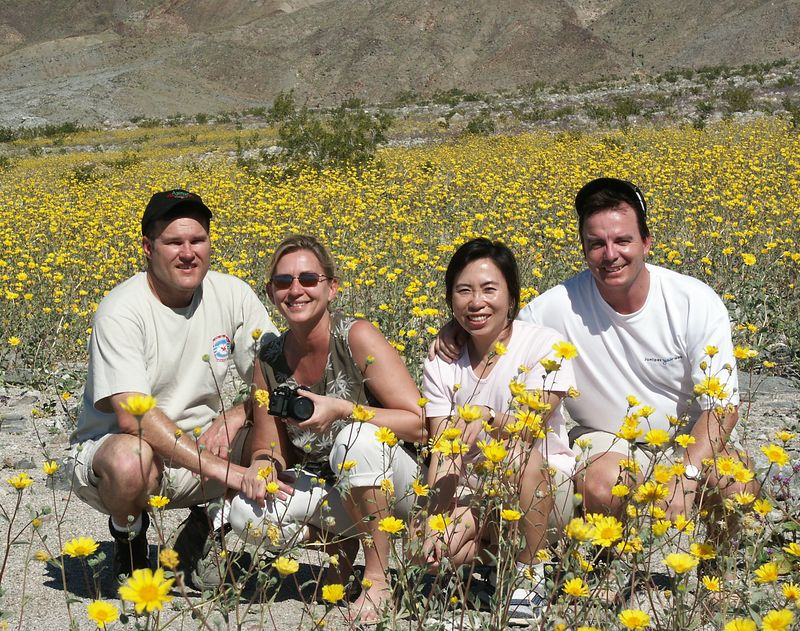 Early morning picture to avoid the big crowd.<br /> The Desert Sunflower is a slender, hairy plant that grows 1 to 3 feet high.