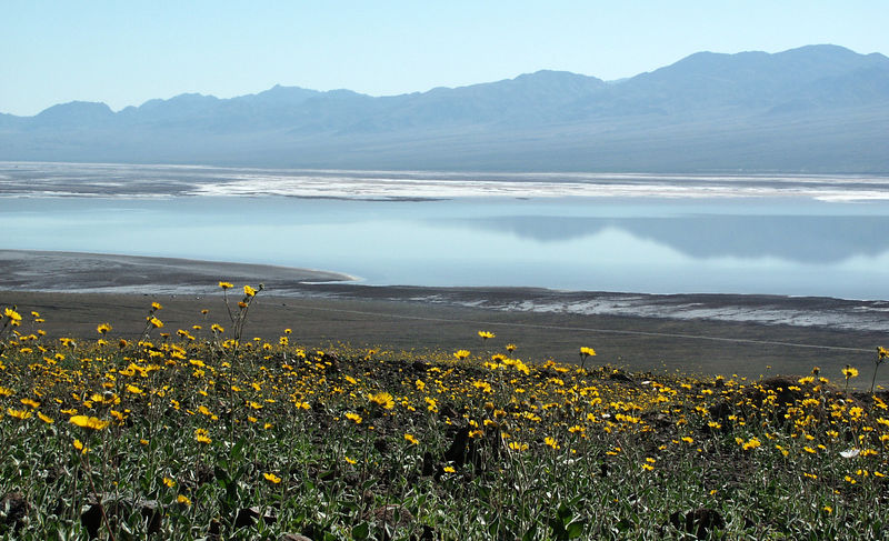 Sunflowers, lake, crushed salt, and mountains in the background: Is this really Death Valley?