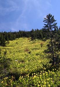 Haystack Butte area.