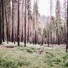 Yosemite Day 1   2016 Edition