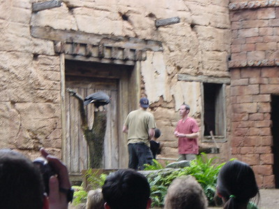 2003-12 Animal Kingdom