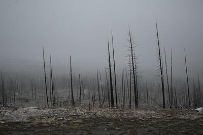 2015-09-05 GNP Post-Forest Fire