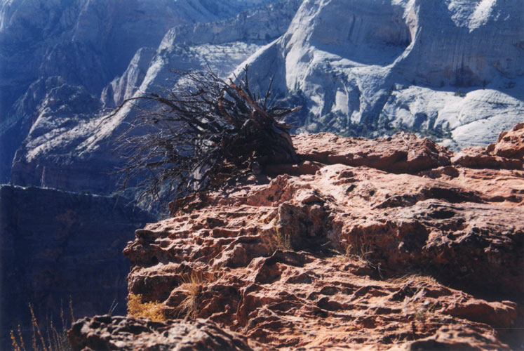 Zion N.P. - Observation Point