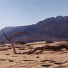Death Valley N.P. - Mesquite Flat Sand Dunes