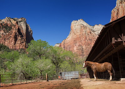Horse Corral near the Court of the Patriarchs, Zion NP