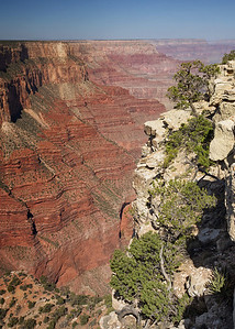 Grand canyon pine cliff