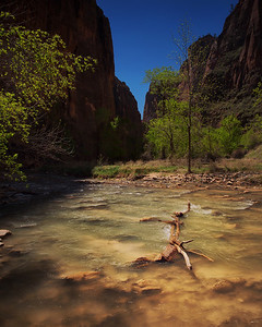 Log in the River, Zion NP