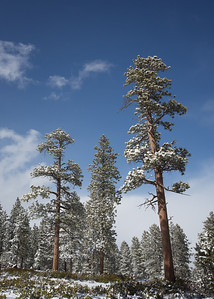 Snow Pines, Bryce NP