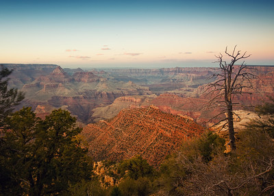 Dead Tree at Grand Canyon NP