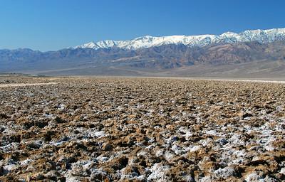 Salt crystals push through mud cracks.