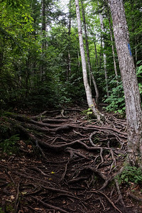 Typical root strewn trail.