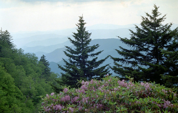 Great Smokies and Environs, June 2001