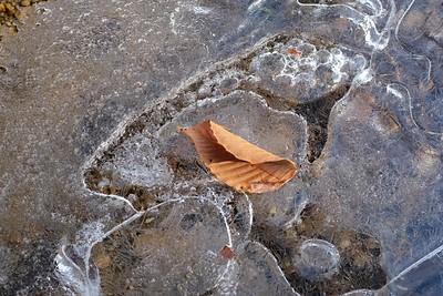 Solitary leaf.