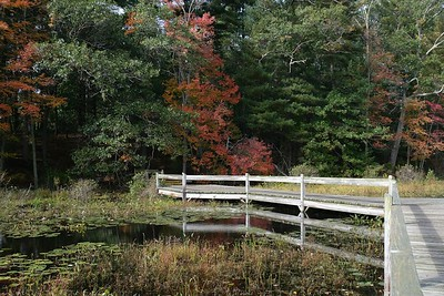 A touch of fall color along Mill Pond Trail.