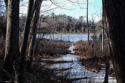 Cedar Pond.