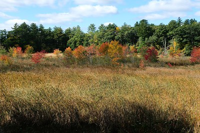 Ipswich River Wildlife Sanctuary - Topsfield, MA.