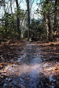 A bit of ice still on the trail...