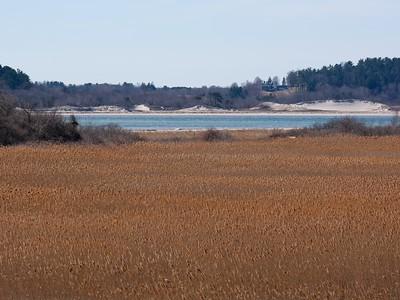 View across the Reed Grass - Phragmites australis.