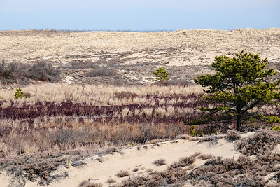 Winter color on the sand dunes.