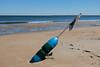 Washed ashore...