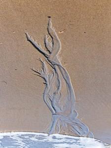 Sand tree.