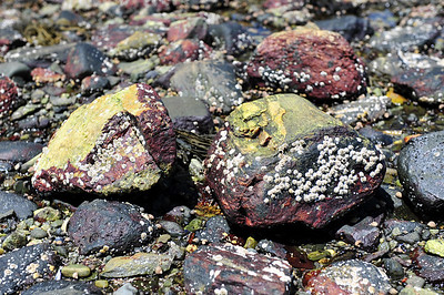 Beach rocks.