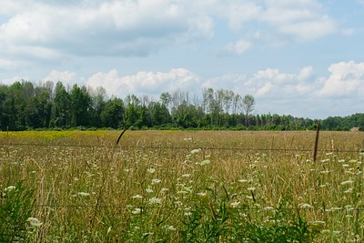 Overlooking the Pasture.