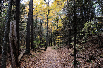 Fall color along the Bridal Path Trail.