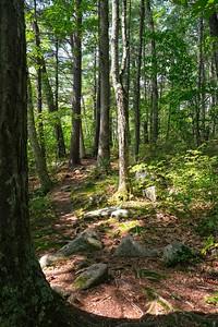 Hiking Silk Farm Wildlife Center - Concord, NH.