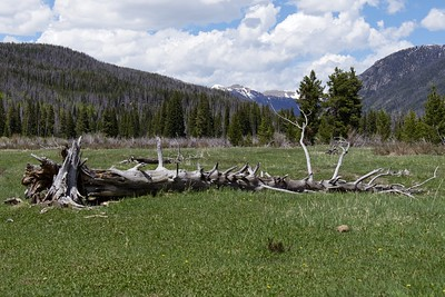 Sketching along the Coyote Valley Interpretive Trail and Holzwath Historic Site.   Rocky Mountain National Park, CO.