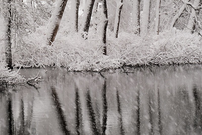 Snowy reflections.