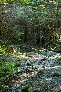 Along the Overlook Trail. Mount Greylock - Lanesborough, MA.