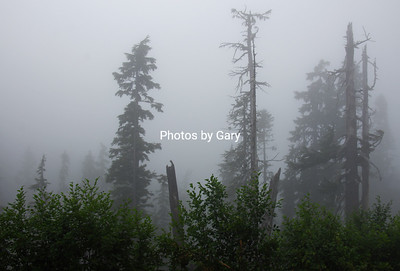 Mt Baker Scenic Highway in the fog