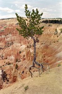 Bryce Canyon National Park, May 2000