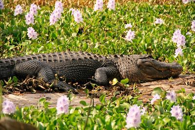 2008_Florida trip (37 of 42)