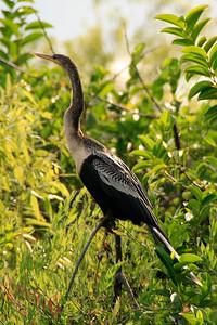 2008_Florida trip (40 of 42)
