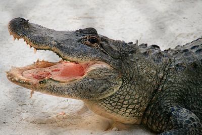 2008_Florida trip (34 of 42)
