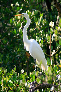 2008_Florida trip (9 of 42)