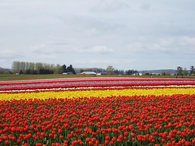 2012-04 Tulip Festival